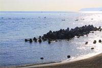 アワビ漁(野田村)