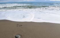 玉川海岸の砂浜