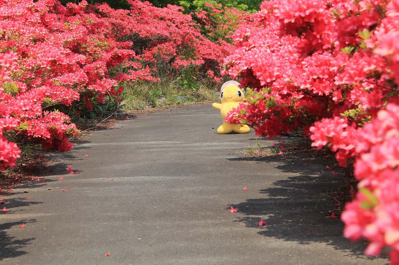 5月のツツジ(岩手県野田村)