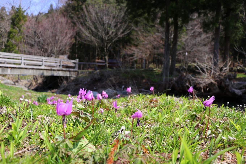 春の妖精(岩手県野田村)