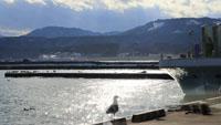 かもめと漁港(野田村)