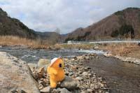 安家川 鮭の稚魚放流