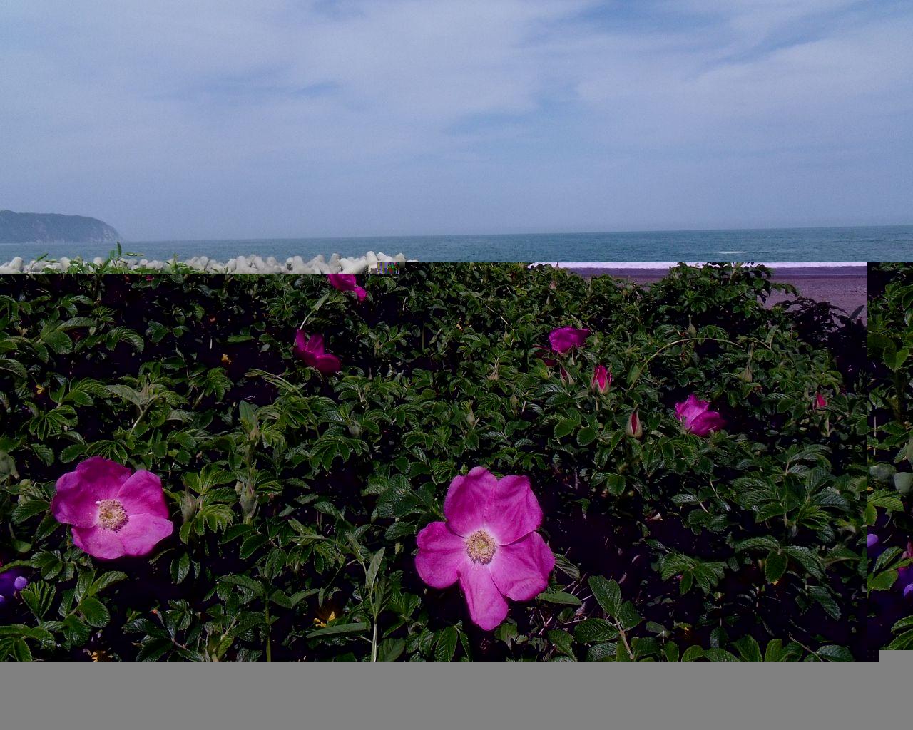 初夏の訪れ(岩手県野田村)