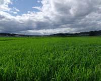 梅雨の合間(野田村)