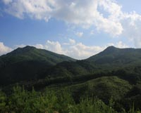 夏の和佐羅比山(野田村)