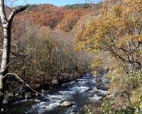 晩秋の安家川