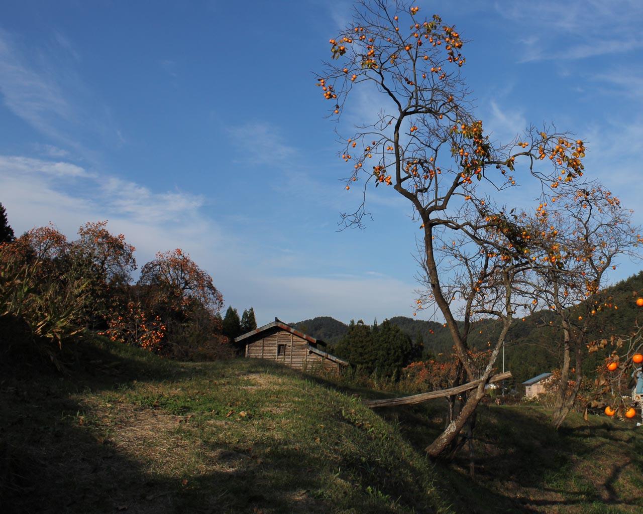 里山のオレンジ(岩手県野田村)