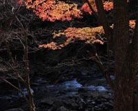 安家川の紅葉