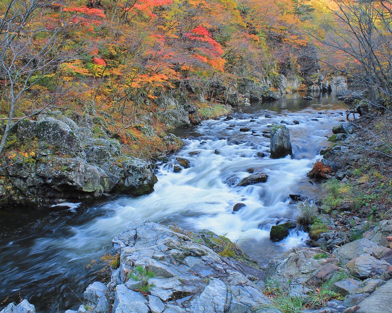 秋の安家渓谷(岩手県野田村)